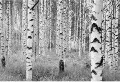 Vliestapete, Komar, »Woods«, 368/248 cm