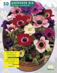 Baltus Anemone (Anemoon) bloembollen - The Caen Mix - 2 x 30 stuks