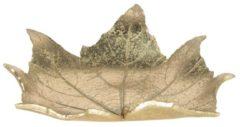 Decoratie schaaltje | 22*19*5 cm | Goudkleurig | Kunststof | Blad | Clayre & Eef | 6PR3005