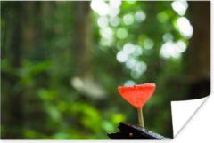 Groene PosterMonkey Rode paddenstoel met een vervaagde achtergrond poster 120x80 cm - Foto print op Poster (wanddecoratie woonkamer / slaapkamer) / Planten Poster