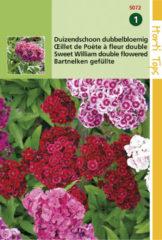 Buzzy Seeds Duizendschoon Bloemzaad - Dianthus Barbatus Dubbelbloemig - Gemengd