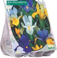 Baltus Iris Hollandica - 2 x 50 stuks