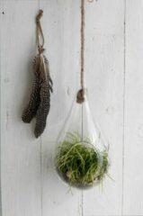 AllHomeDecorations Plantenhanger van Glas - Hangvaas - Hangpot - Hangende Bloempot aan Jute Touw - Ø15 h.33 cm