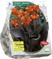 Canna bruinblad, Oranje per 3 verpakt | Baltus Bloembollen | Zomerbloeier | Pluktuin