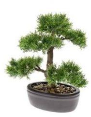 Groene Easyplants Kunst Cedar bonsai 32 cm in pot