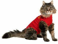 Medical Pet Shirt Kat XXXXS Rood
