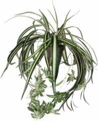 Groene Mica Decorations – Plant New Day Mica Decorations - Chlorophytum Groen, L 45cm D 45cm - In bloempot grijs