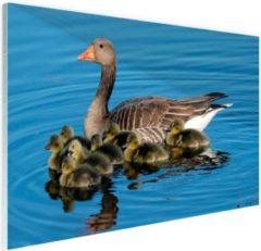 Bruine FotoCadeau.nl - Gans met babyganzen in het water Glas 90x60 cm - Foto print op Glas (Plexiglas wanddecoratie)