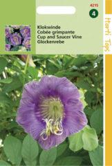 Merkloos / Sans marque Hortitops Zaden - Cobaea Scandens Violetblauw