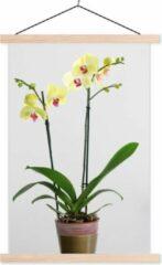 TextilePosters De gele orchideeën in een bloempot schoolplaat platte latten blank 40x60 cm - Foto print op textielposter (wanddecoratie woonkamer/slaapkamer)