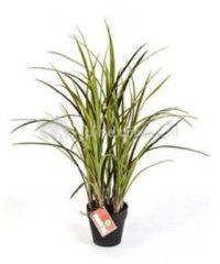 Plantenwinkel.nl Kunstplant Natural grass groen M