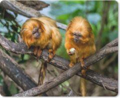 MousePadParadise Muismat Gouden Leeuwaapje - Twee kleine Gouden Leeuwaapjes in de bomen muismat rubber - 23x19 cm - Muismat met foto