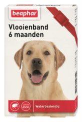 Beaphar Vlooienband 6 Mnd Hond 65 cm - Anti vlooienmiddel - Rood