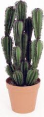 Oosterik Home Cactus Rattlesnake XXL met pot