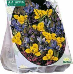 Baltus Iris Reticulata, Mix - 2 x 50 stuks