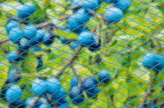 Blauwe Tuinnet nano blauw maaswijdte 8x8mm 22 g/m2 5x4m Nature