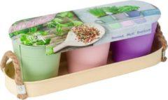 Paarse Baltus Herb Festival - 3 x kruidenpot | |Complete kweekset | Incl. kruiden | Cadeau | Pastel | Pasen