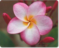 MousePadParadise Muismat Plumeria - Close-up van een roze Plumeria bloem muismat rubber - 23x19 cm - Muismat met foto