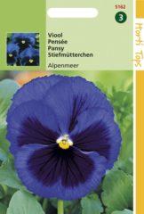 Blauwe Buzzy Seeds Hortitops Zaden - Viola Tric. Max. Alpenmeer