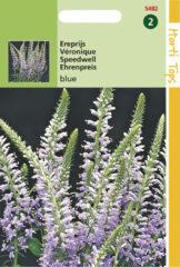 Blauwe Buzzy Seeds Hortitops Zaden - Veronica Spicata (Ereprijs) Blauw