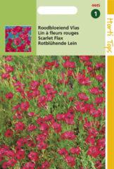Rode Hortitops Zaden - Linum Rubrum Grandiflorum, Rood