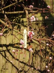 Gele Nature 15x Fruitbomen/planten etiketten 10 cm - Moestuin labels 15 stuks - Tuin artikelen