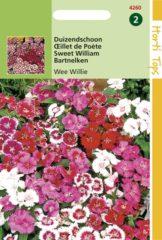 Rode Hortitops Zaden - Dianthus Barbatus Wee Willie Gemengd
