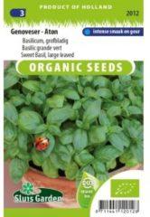 Groene Sluis Garden - Basilicum Genoveser Aton Biologisch (Ocimum basilicum)