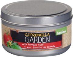 Rode Geurkaars Blik Citronella/Tomatenblad 24 Branduren