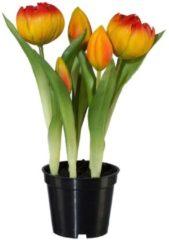 2er Set Tulpen Gasper Orange