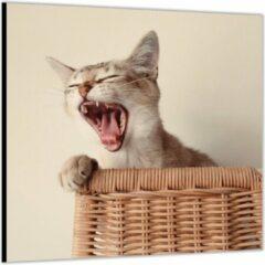 Paarse KuijsFotoprint Dibond –Gapende Kat op Rieten stoel– 50x50 Foto op Aluminium (Wanddecoratie van metaal)