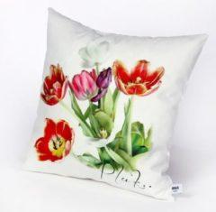 Witte HUGS Indoor 50x50 tulpen