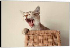 Paarse KuijsFotoprint Dibond –Gapende Kat op Rieten stoel– 150x100 Foto op Aluminium (Wanddecoratie van metaal)