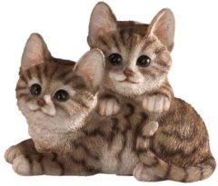 Katzenkinder Tewa braun getiegert