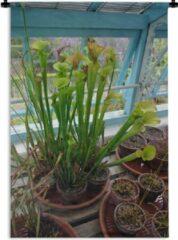 Blauwe 1001Tapestries Wandkleed Tropische Bekerplanten - Vleesetende Tropische Bekerplanten in een bloempot Wandkleed katoen 120x180 cm - Wandtapijt met foto XXL / Groot formaat!