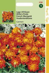 Oranje Buzzy Seeds Hortitops Zaden - Tagetes Patula Nana Carmen