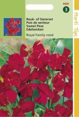 Rode Hortitops Zaden - Lathyrus Odor. Royal Family Rood
