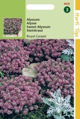 Roze Hortitops Zaden - Alyssum (Lobularia) Mar. Procumbens Royal Carpet
