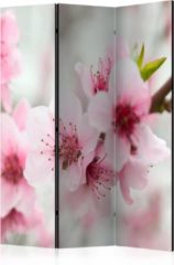 Kamerscherm - Scheidingswand - Vouwscherm - Spring, blooming tree - pink flowers [Room Dividers] 135x172 - Artgeist Vouwscherm