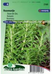 Groene Sluis Garden - Rozemarijn (Rosmarinus officinalis)
