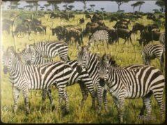 Stemen Kinderpuzzel zebra 28 cm x 21 cm