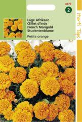 Oranje Buzzy Seeds Hortitops Zaden - Tagetes Patula Nana Petite Orange