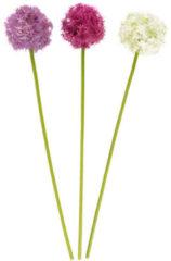 Fleurange Zierlauch, 3tlg.