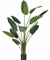 Groene Easyplants Kunstplant Strelitzia 190 cm