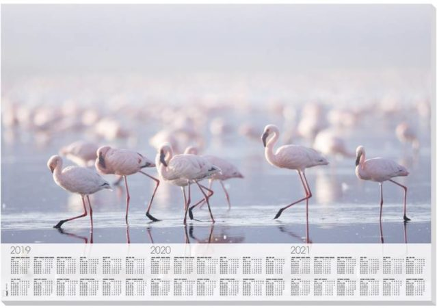 Afbeelding van Onderleggers Sigel Flamingo met 3 jarig kalendarium 30 vel 2019/20/21
