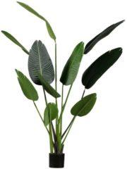 WOOOD Strelitzia kunstplant groen, div afmetingen H 164 x B 96 x D 63 cm