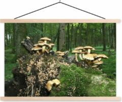 Groene TextilePosters Groep paddenstoelen in het bos schoolplaat platte latten blank 60x40 cm - Foto print op textielposter (wanddecoratie woonkamer/slaapkamer)