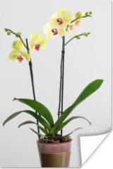 PosterMonkey De gele orchideeën in een bloempot poster 120x180 cm - Foto print op Poster (wanddecoratie woonkamer / slaapkamer) XXL / Groot formaat!