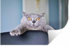 StickerSnake Muursticker Close-up Katten - Angstige kat hangend aan stoel - 90x60 cm - zelfklevend plakfolie - herpositioneerbare muur sticker