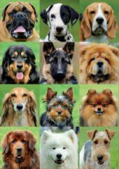 Carletto Deutschland GmbH Educa collage van honden puzzel 500 stukjes
